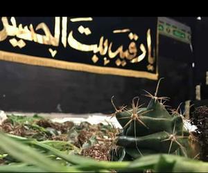 الشام, يازينب, and شوك image