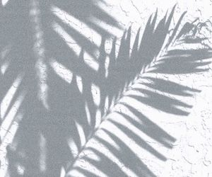 plants, shadow, and white image