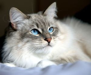 cats and fur image