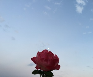 flower, moon, and nature image