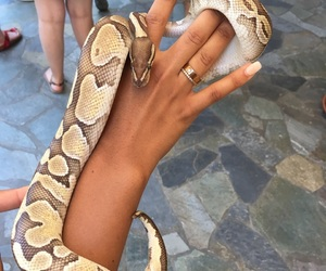 animals, cartier, and hand image