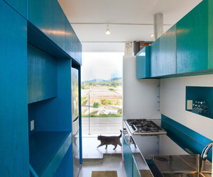 blue, cat, and kitchen image