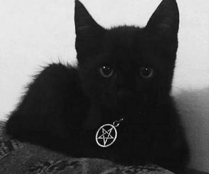black, animal, and cat image