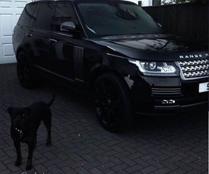 black, car, and dog image