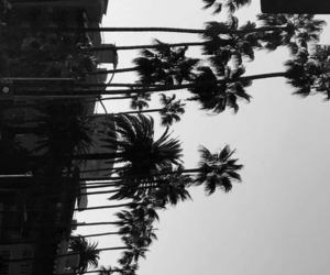 black and white, palms, and summer image