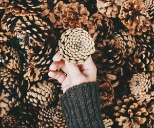 autumn, fall, and pinecone image