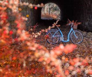 autumn, bicycle, and fall image