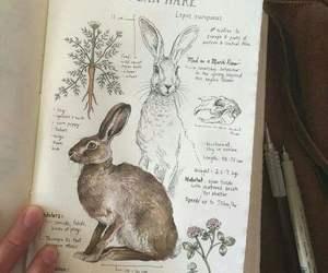 art, animal, and bunny image