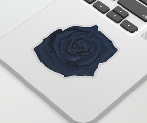 blue rose, petals, and roses image