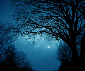 blue, moonlight, and tree image