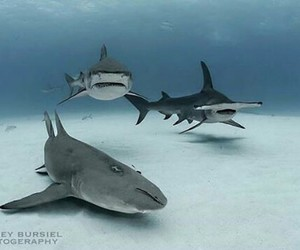 blue, kings, and sharks image