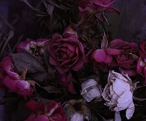 flowers, dark, and purple image