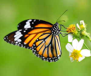 butterfly, flower, and orange image