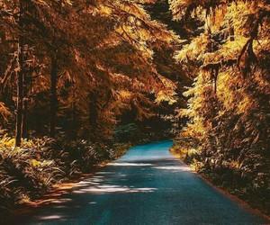 adventure, autumn, and cozy image