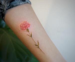 arm, carnation, and fashion image