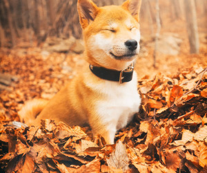 puppy, aesthetic, and animals image
