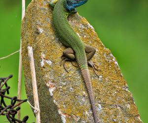 animals, wild, and beautiful image