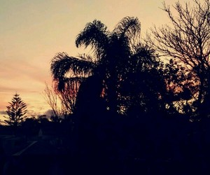 palmtree, pretty, and sunset image
