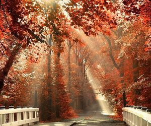 autumn, nature, and tree image