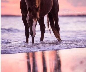 beach, horse, and ocean image