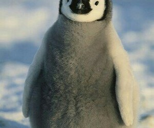 fluffy, Happy Feet, and penguin image