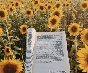 book, yellow, and sunflower image
