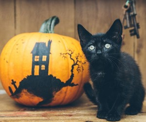Halloween, pumpkin, and cat image