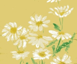 daisy and yellow image