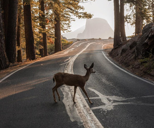 deer, forest, and autumn image