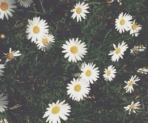 beautiful, bouquets, and daisies image