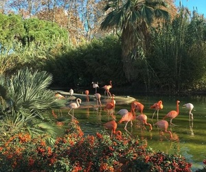 animals, flamingo, and lake image