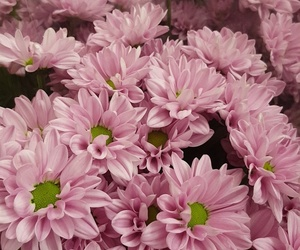 flowers, pink, and girls image