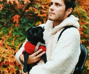 autumn, dog, and ️nala image