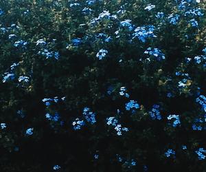 bio, blue, and calm image