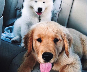 adorable, dogs, and puppy image