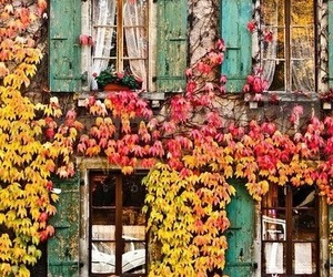 autumn, flowers, and house image