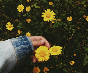 flowers, tumblr, and photography image