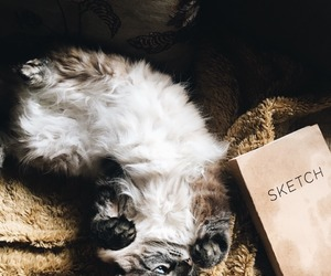 aesthetic, beautiful, and cat image