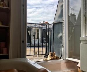 cat, bath, and interior image