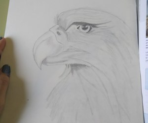 art, drawing, and aguila image