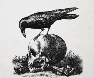 skull, raven, and crow image