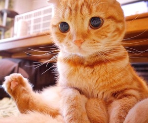 cat and orange image