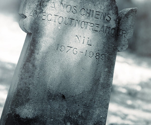 grave, gravestone, and grey image