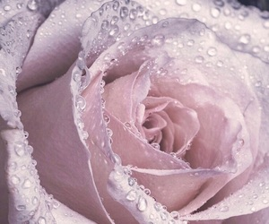 rose, flowers, and bouquet image