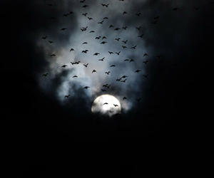 dark, moon, and birds image