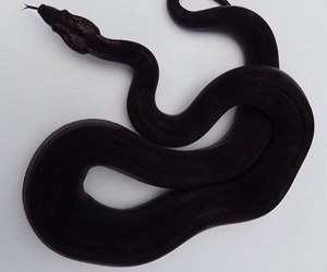 snake, black, and aesthetic image