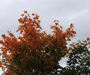 autumn, dark, and fall image