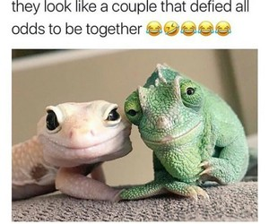 couple, funny, and cute image