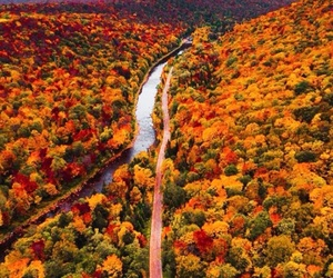 autumn, fall, and colors image