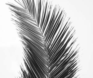 black and white, etsy, and modern wall art image